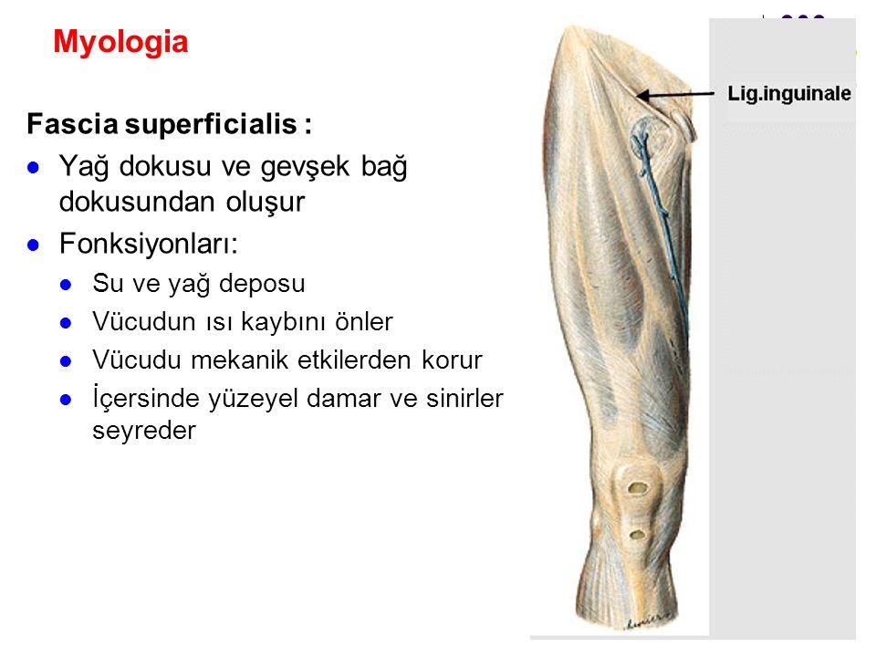 Myologia Fascia superficialis :