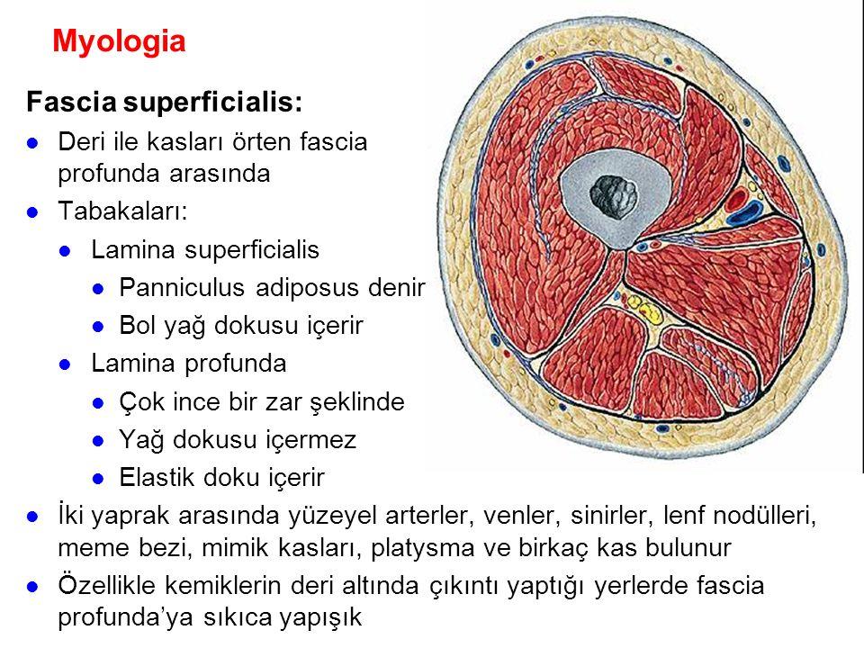 Myologia Fascia superficialis: