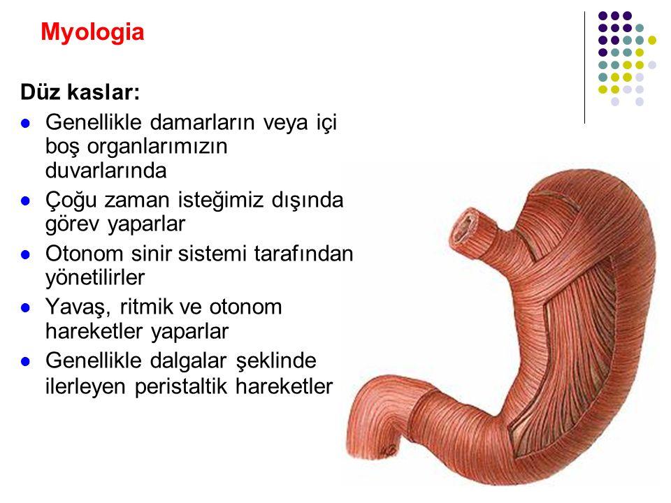 Myologia Düz kaslar: Genellikle damarların veya içi boş organlarımızın duvarlarında. Çoğu zaman isteğimiz dışında görev yaparlar.