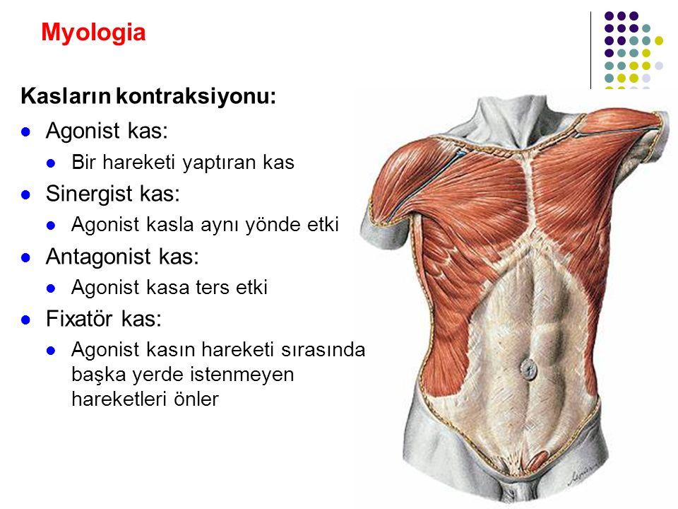 Myologia Kasların kontraksiyonu: Agonist kas: Sinergist kas: