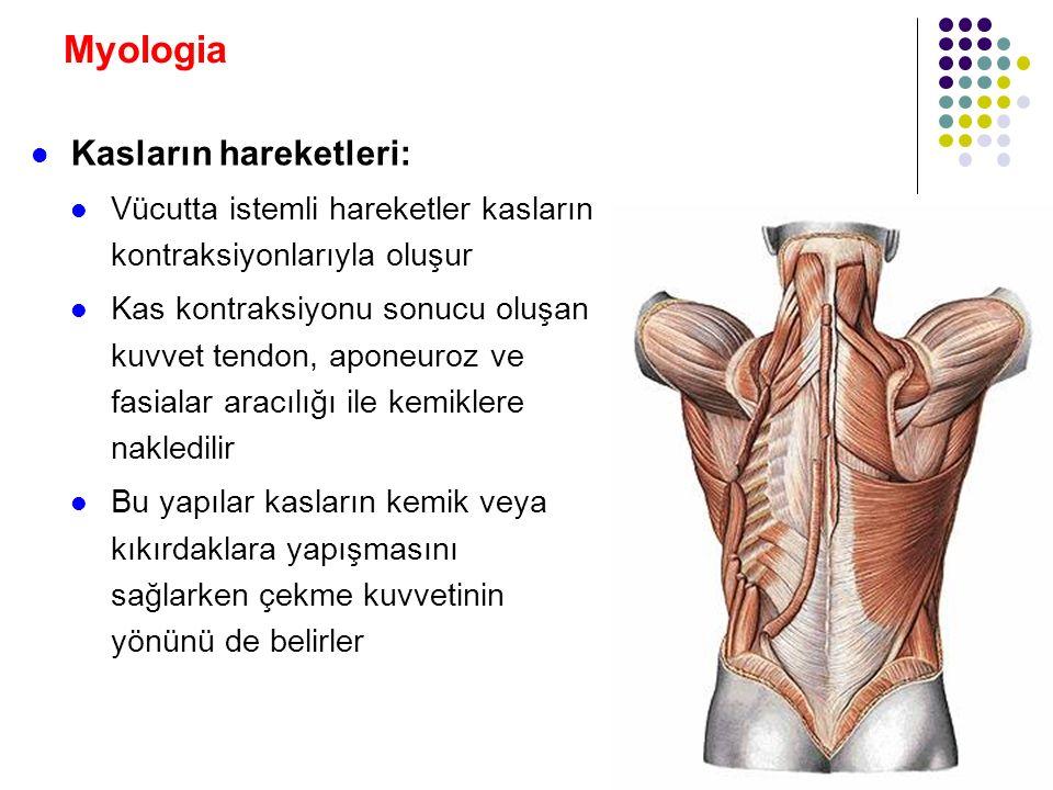 Myologia Kasların hareketleri: