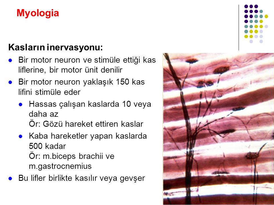 Myologia Kasların inervasyonu: