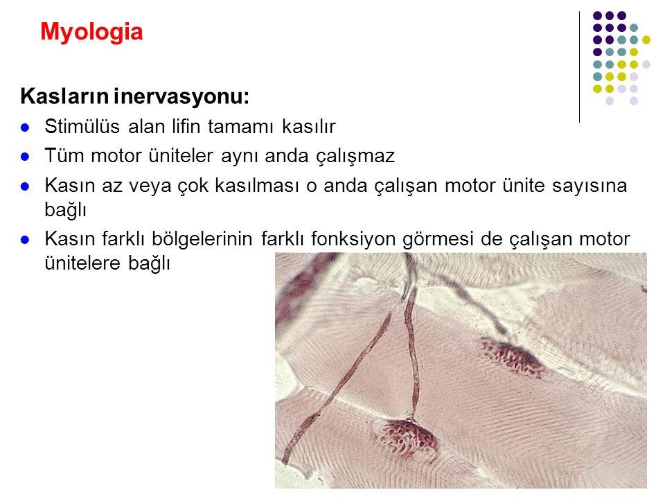Myologia Kasların inervasyonu: Stimülüs alan lifin tamamı kasılır