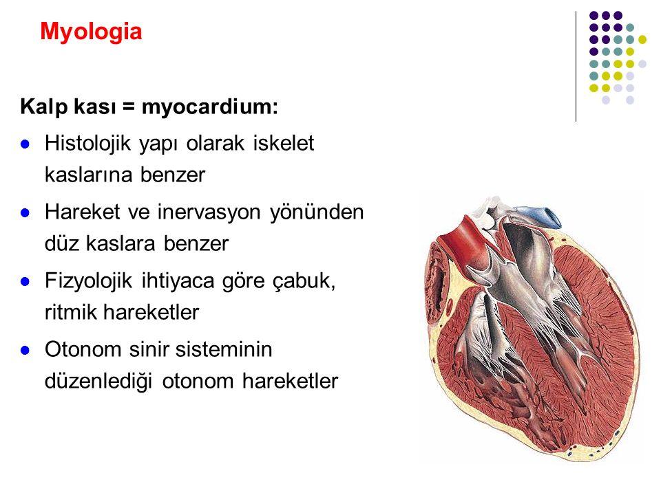 Myologia Kalp kası = myocardium: