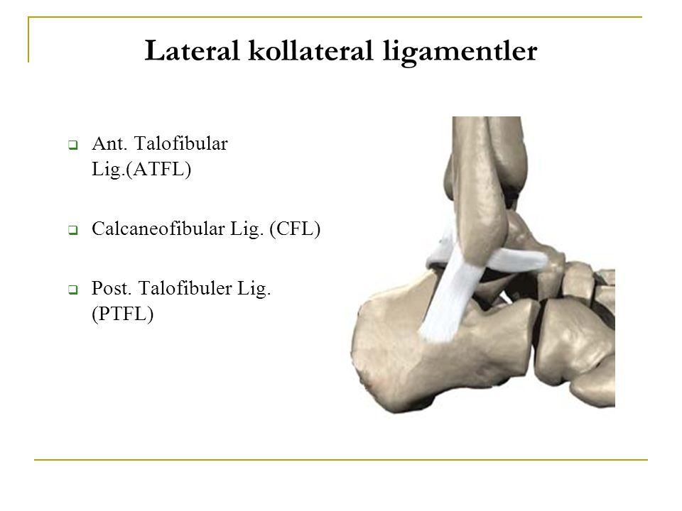 Lateral kollateral ligamentler