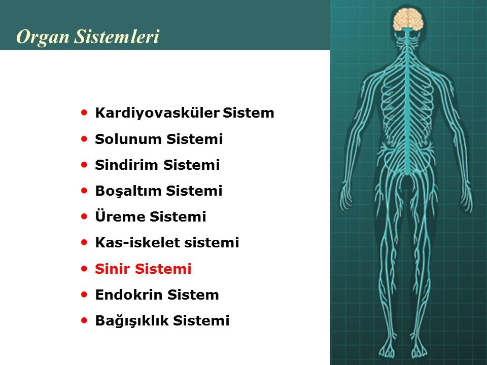 Organ Sistemleri Kardiyovasküler Sistem Solunum Sistemi