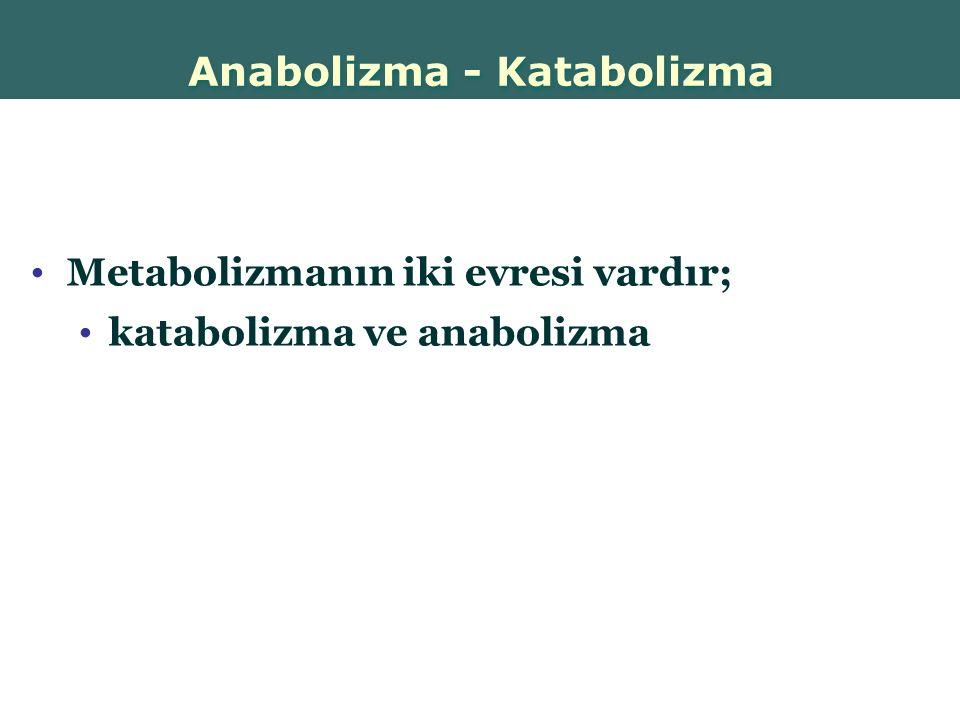 Anabolizma - Katabolizma
