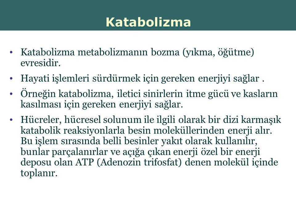 Katabolizma Katabolizma metabolizmanın bozma (yıkma, öğütme) evresidir. Hayati işlemleri sürdürmek için gereken enerjiyi sağlar .