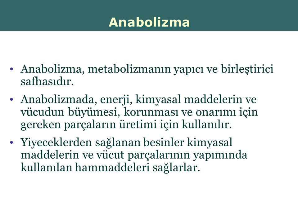 Anabolizma Anabolizma, metabolizmanın yapıcı ve birleştirici safhasıdır.