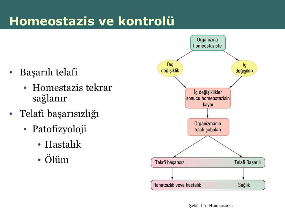 Homeostazis ve kontrolü