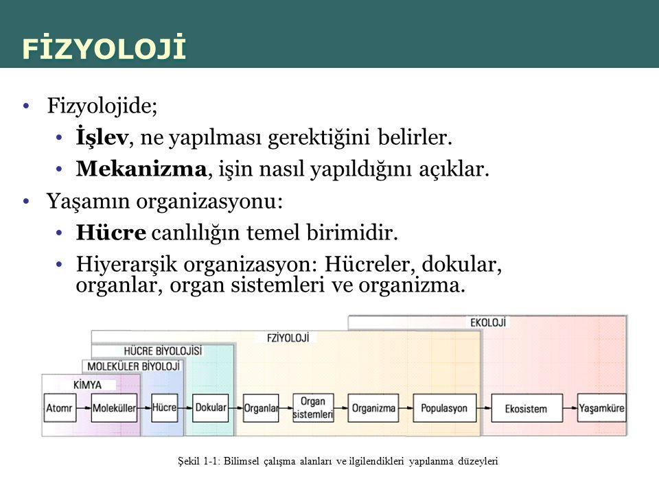FİZYOLOJİ Fizyolojide; İşlev, ne yapılması gerektiğini belirler.