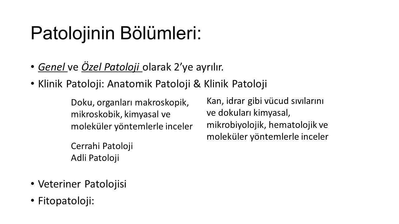 Patolojinin Bölümleri: