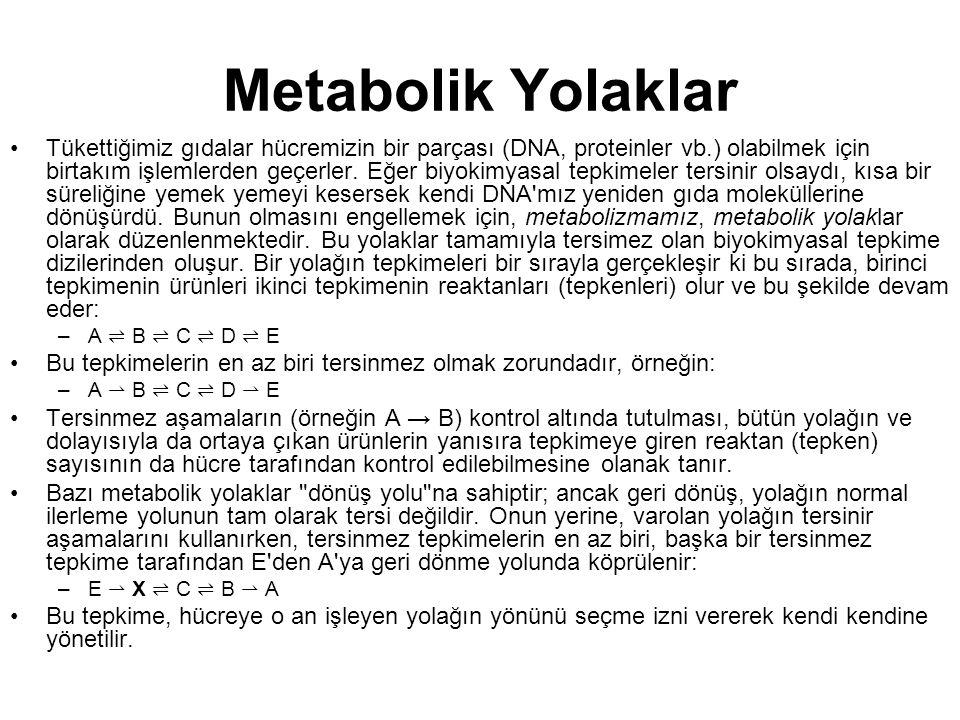 Metabolik Yolaklar