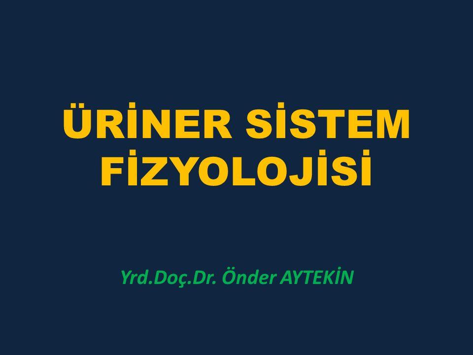 ÜRİNER SİSTEM FİZYOLOJİSİ