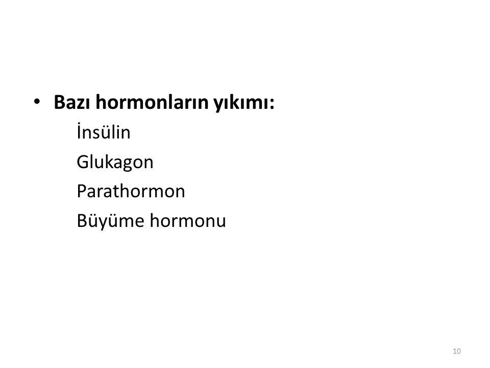 Bazı hormonların yıkımı: