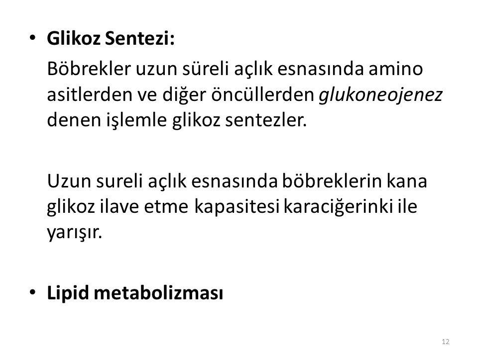 Glikoz Sentezi: Böbrekler uzun süreli açlık esnasında amino asitlerden ve diğer öncüllerden glukoneojenez denen işlemle glikoz sentezler.