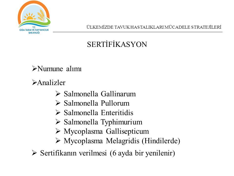Salmonella Gallinarum Salmonella Pullorum Salmonella Enteritidis