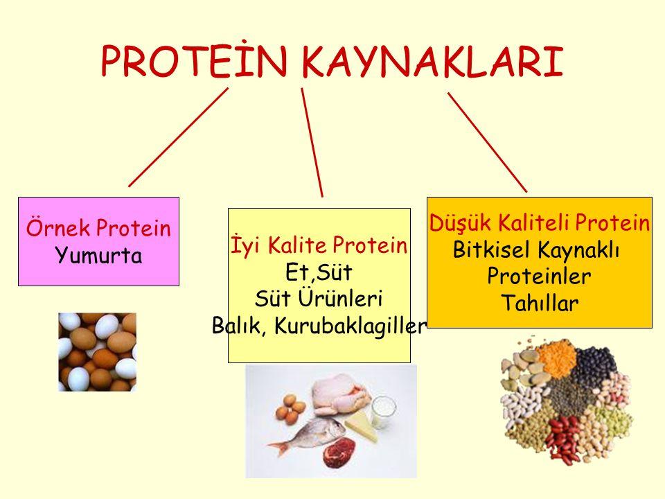 PROTEİN KAYNAKLARI Düşük Kaliteli Protein Örnek Protein