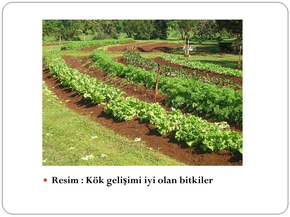 Resim : Kök gelişimi iyi olan bitkiler