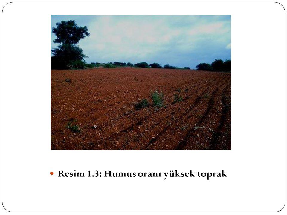 Resim 1.3: Humus oranı yüksek toprak