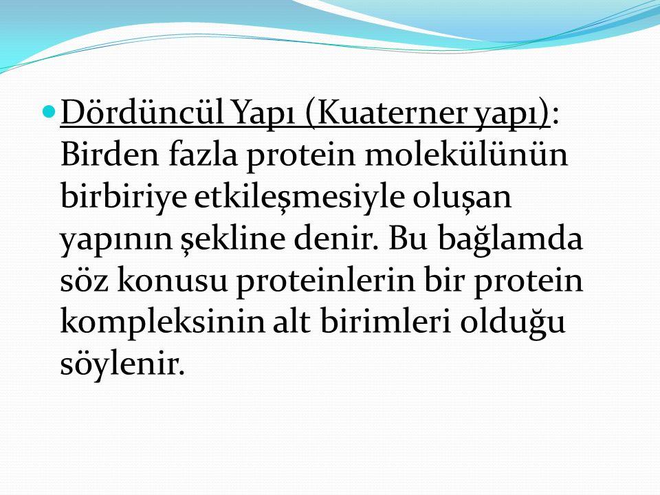 Dördüncül Yapı (Kuaterner yapı): Birden fazla protein molekülünün birbiriye etkileşmesiyle oluşan yapının şekline denir.