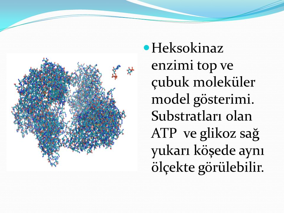 Heksokinaz enzimi top ve çubuk moleküler model gösterimi