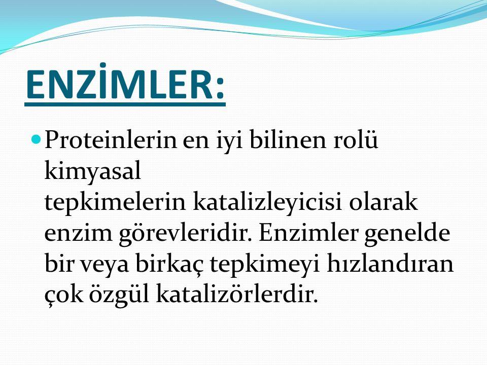 ENZİMLER: