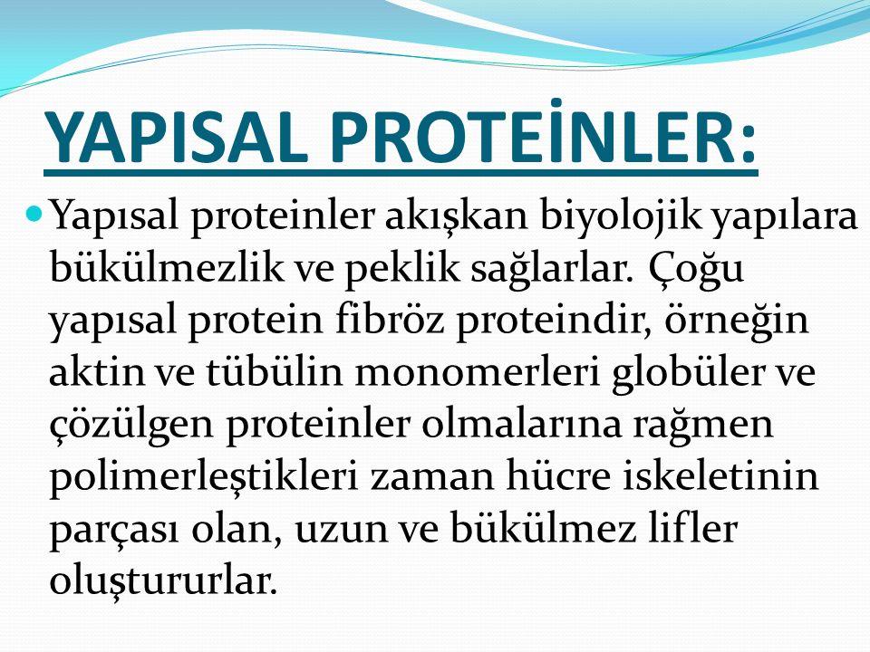 YAPISAL PROTEİNLER: