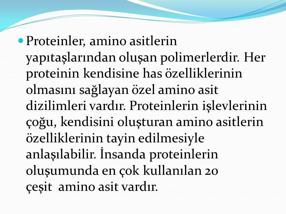 Proteinler, amino asitlerin yapıtaşlarından oluşan polimerlerdir
