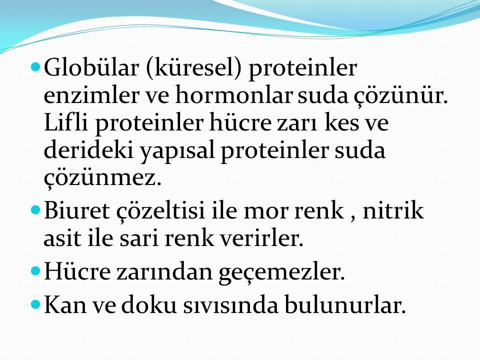 Globülar (küresel) proteinler enzimler ve hormonlar suda çözünür