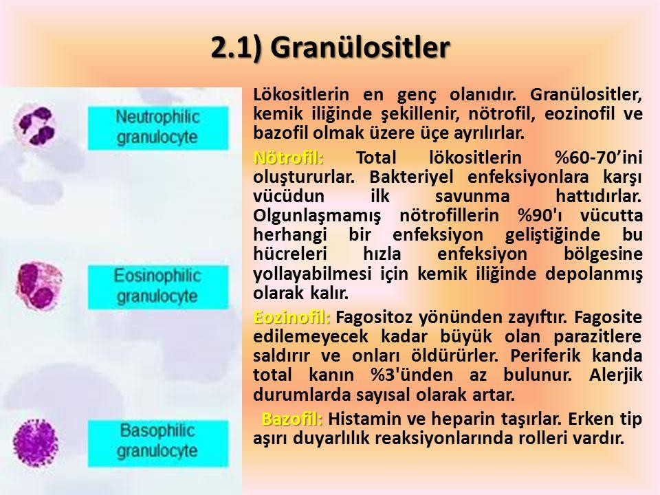 2.1) Granülositler