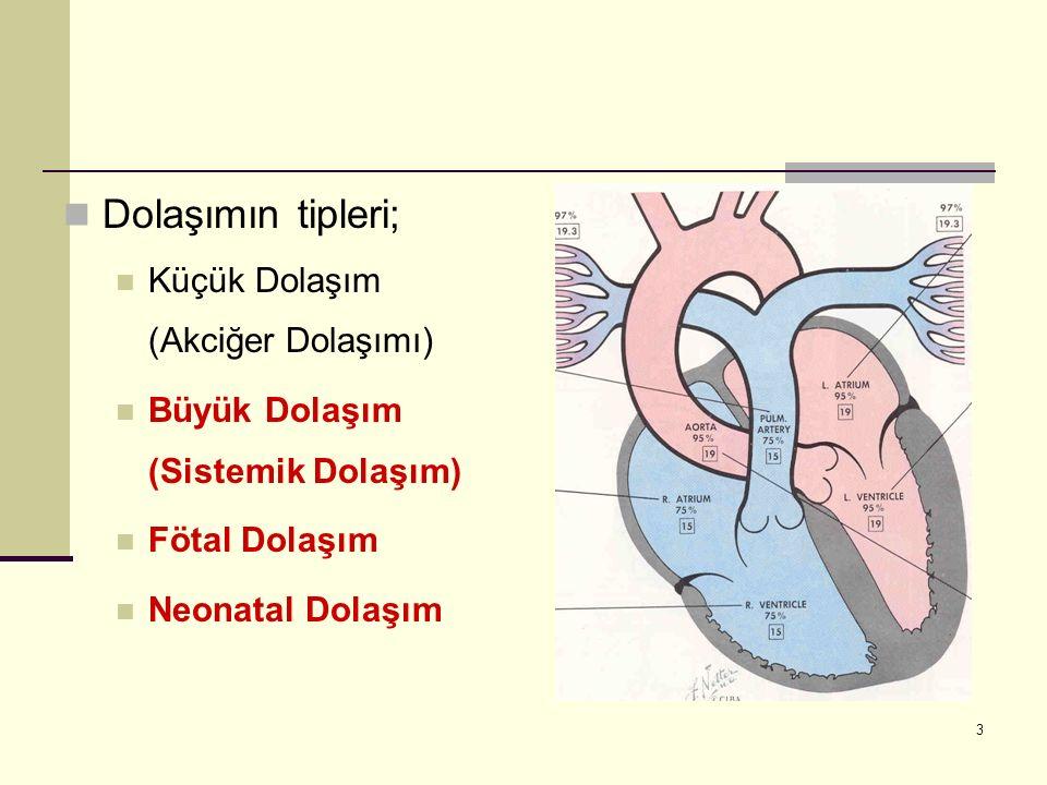 Dolaşımın tipleri; Küçük Dolaşım (Akciğer Dolaşımı)