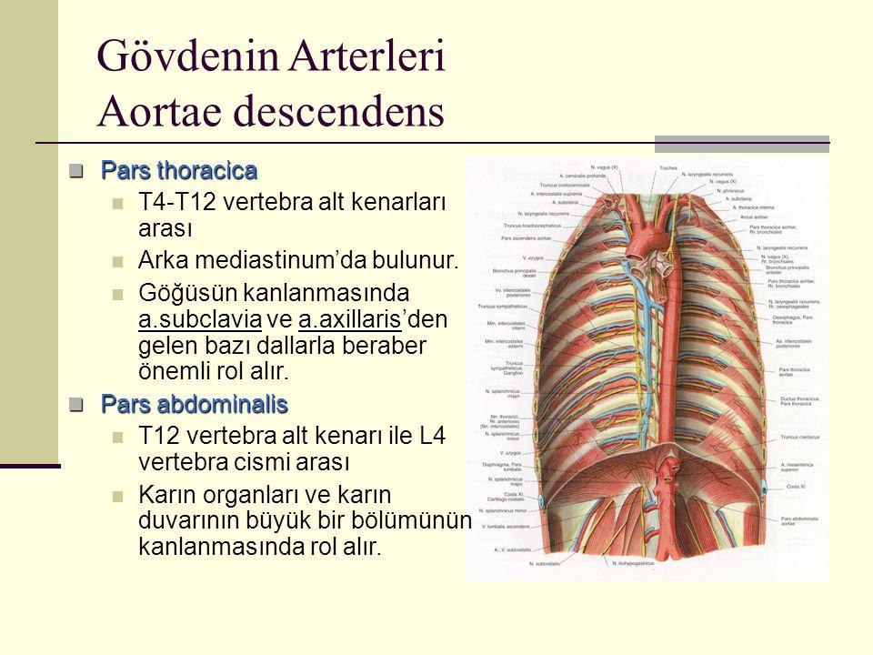 Gövdenin Arterleri Aortae descendens