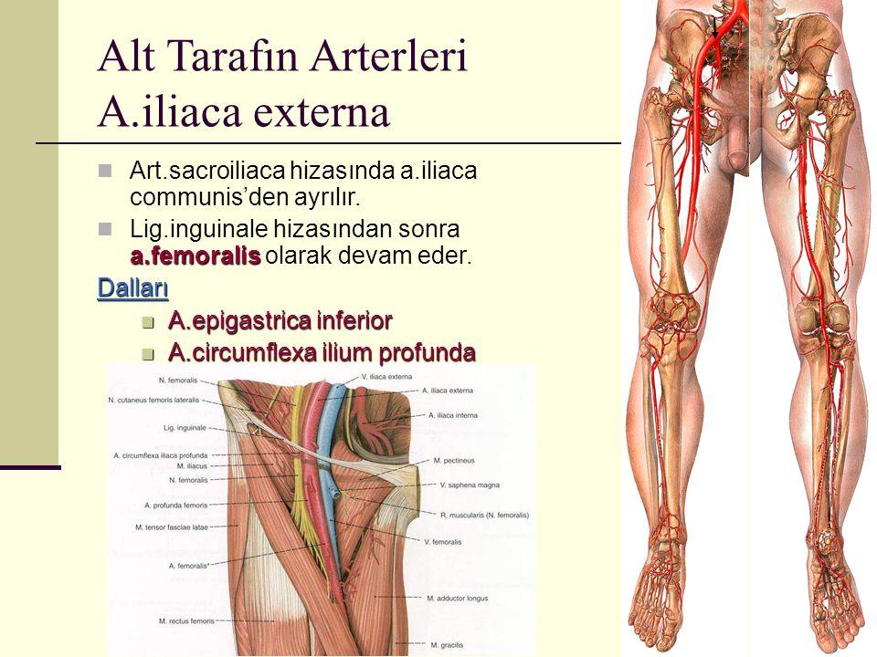 Alt Tarafın Arterleri A.iliaca externa