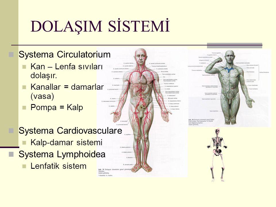DOLAŞIM SİSTEMİ Systema Circulatorium Systema Cardiovasculare