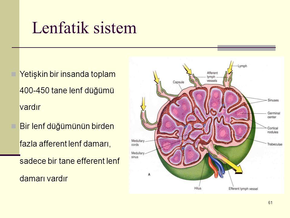 Lenfatik sistem Yetişkin bir insanda toplam 400-450 tane lenf düğümü vardır.