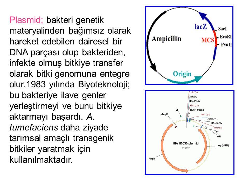 Plasmid; bakteri genetik materyalinden bağımsız olarak hareket edebilen dairesel bir DNA parçası olup bakteriden, infekte olmuş bitkiye transfer olarak bitki genomuna entegre olur.1983 yılında Biyoteknoloji; bu bakteriye ilave genler yerleştirmeyi ve bunu bitkiye aktarmayı başardı.