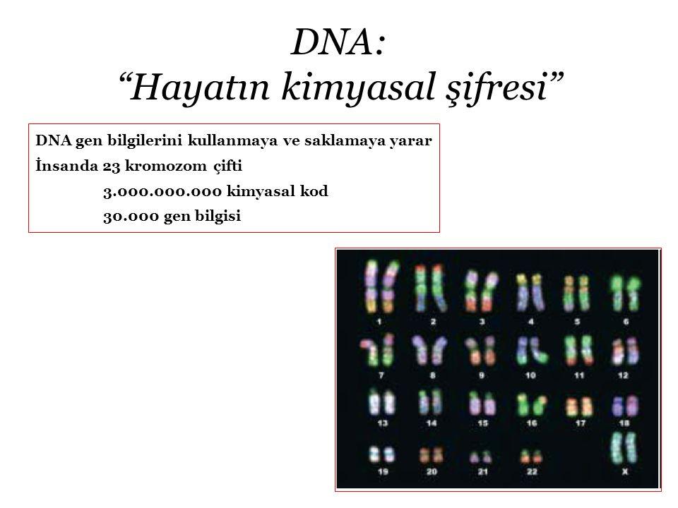 DNA: Hayatın kimyasal şifresi