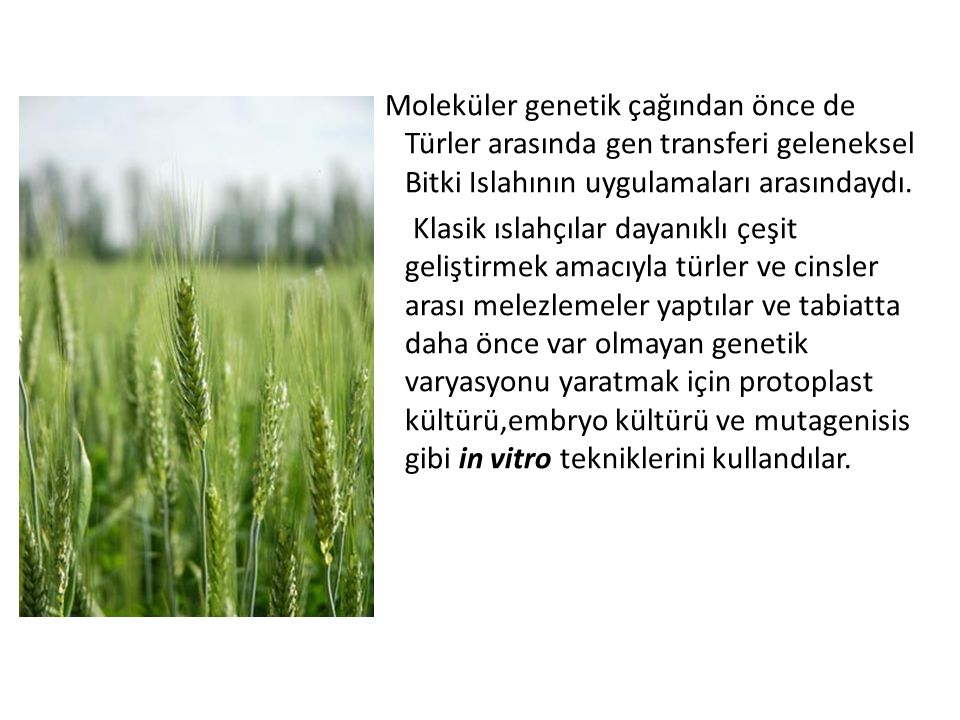 Moleküler genetik çağından önce de Türler arasında gen transferi geleneksel Bitki Islahının uygulamaları arasındaydı.
