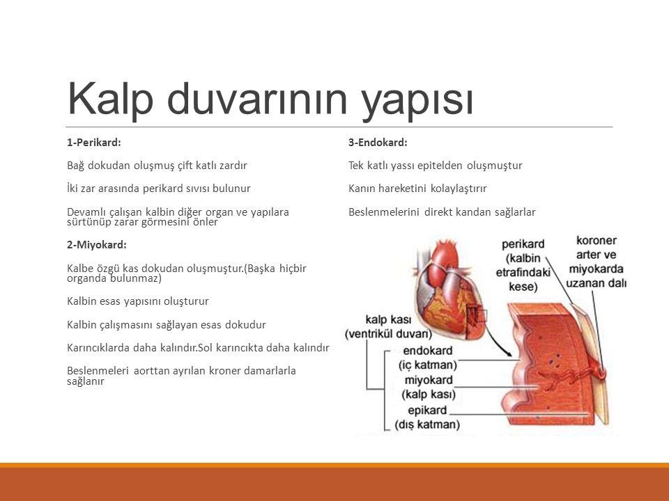 Kalp duvarının yapısı 1-Perikard: