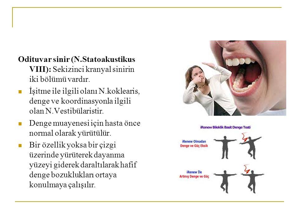Odituvar sinir (N.Statoakustikus VIII): Sekizinci kranyal sinirin iki bölümü vardır.