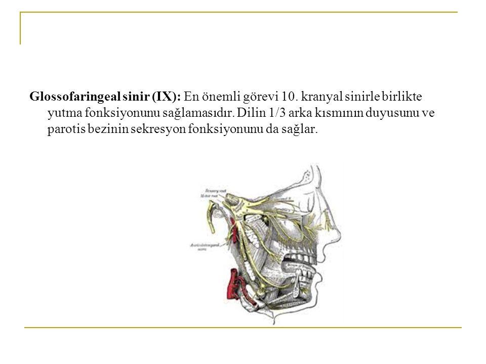 Glossofaringeal sinir (IX): En önemli görevi 10