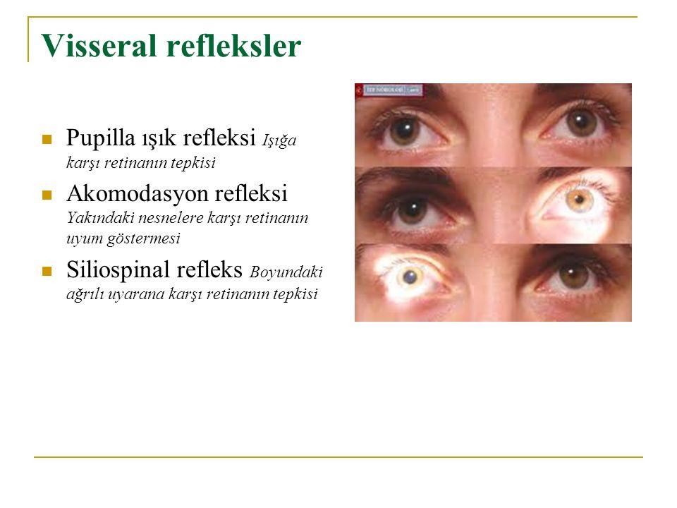 Visseral refleksler Pupilla ışık refleksi Işığa karşı retinanın tepkisi. Akomodasyon refleksi Yakındaki nesnelere karşı retinanın uyum göstermesi.