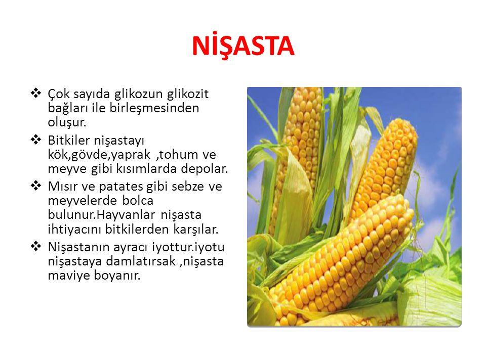 NİŞASTA Çok sayıda glikozun glikozit bağları ile birleşmesinden oluşur. Bitkiler nişastayı kök,gövde,yaprak ,tohum ve meyve gibi kısımlarda depolar.