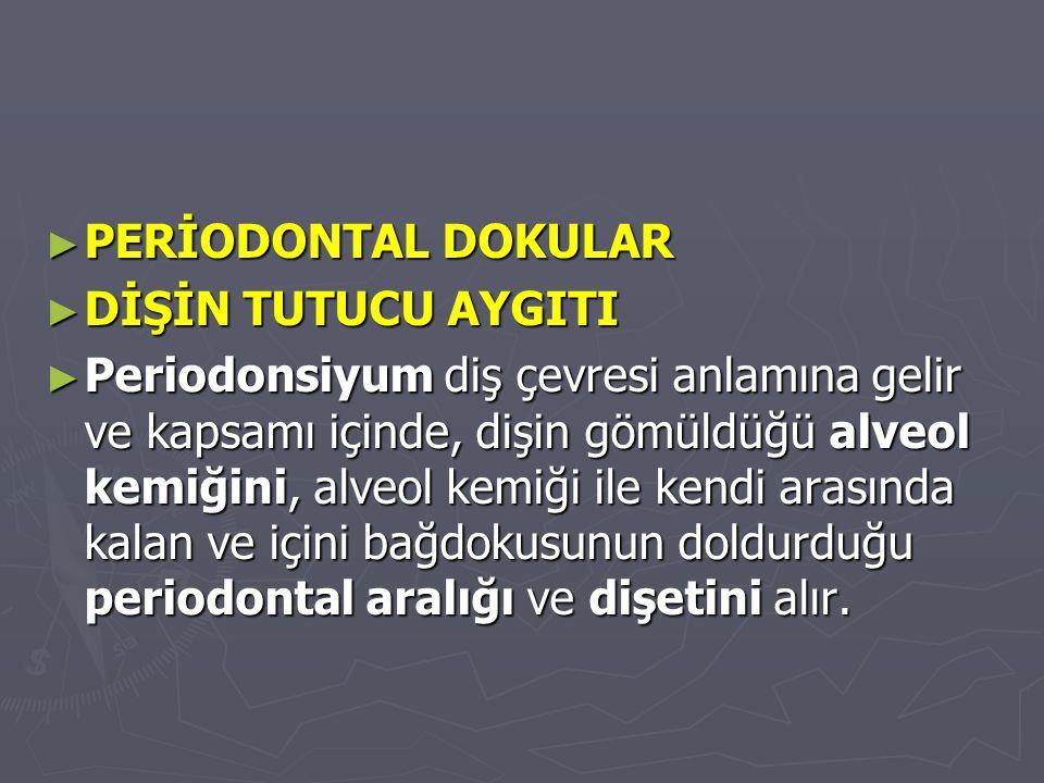PERİODONTAL DOKULAR DİŞİN TUTUCU AYGITI.