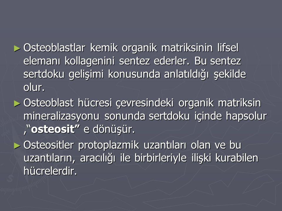 Osteoblastlar kemik organik matriksinin lifsel elemanı kollagenini sentez ederler. Bu sentez sertdoku gelişimi konusunda anlatıldığı şekilde olur.