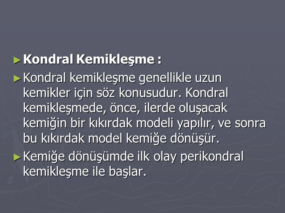 Kondral Kemikleşme :