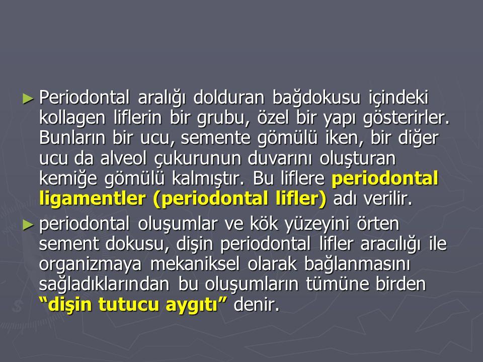 Periodontal aralığı dolduran bağdokusu içindeki kollagen liflerin bir grubu, özel bir yapı gösterirler. Bunların bir ucu, semente gömülü iken, bir diğer ucu da alveol çukurunun duvarını oluşturan kemiğe gömülü kalmıştır. Bu liflere periodontal ligamentler (periodontal lifler) adı verilir.