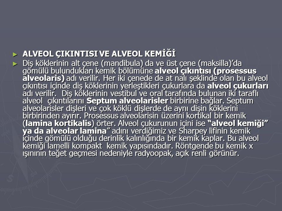 ALVEOL ÇIKINTISI VE ALVEOL KEMİĞİ