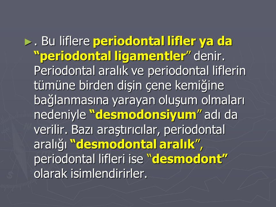 Bu liflere periodontal lifler ya da periodontal ligamentler denir